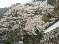 Yokowa41_2
