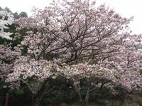 Yokowa52