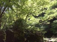Akame32
