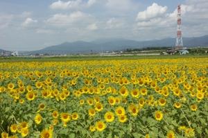 Himawari0051