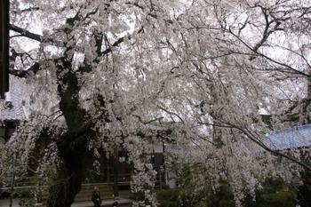 Sentuji0071