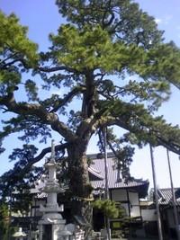 Fujieda003