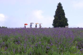 Aoyama11_3