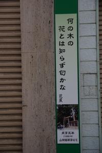 Shinmichi05