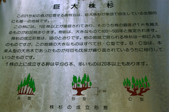 Kabusugi02