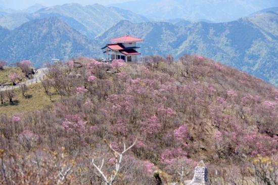 Gozaishoa08
