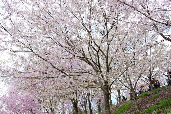 Higashiyamazg13