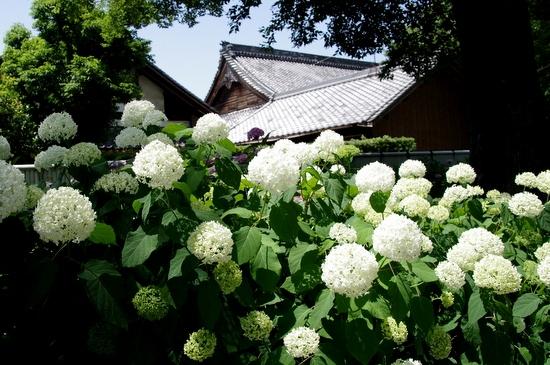 Inazawaa06