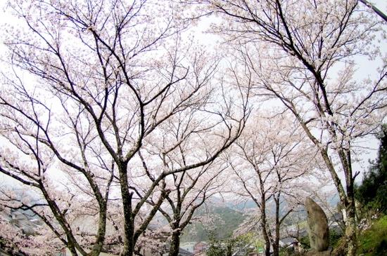 Nagashibina16