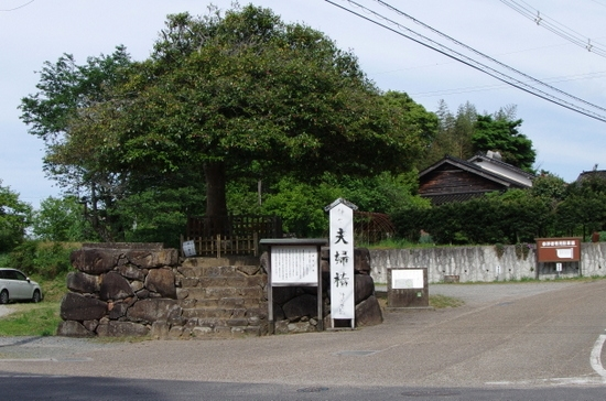 Yaegakis01