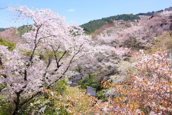 Yoshinob06
