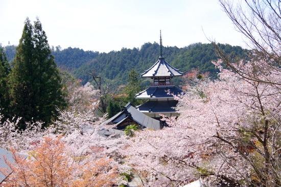 Yoshinob08