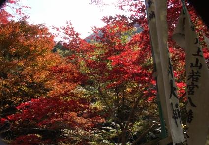 Kawakamii002_2