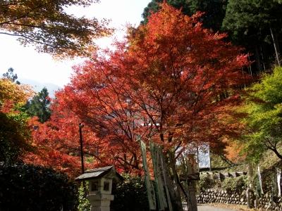 Kawakamii014