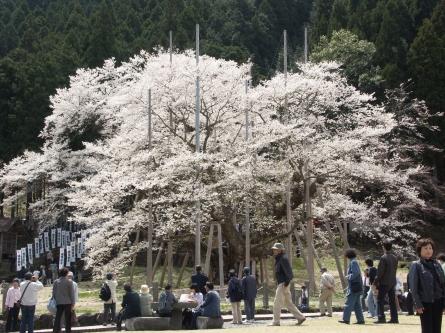 Usuzumi14