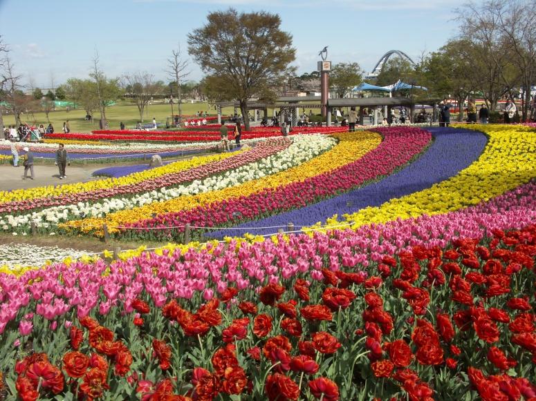 木曽三川公園チューリップ: ぶらり旅