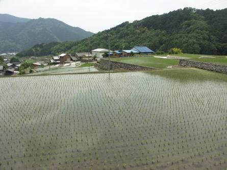 Fukano1