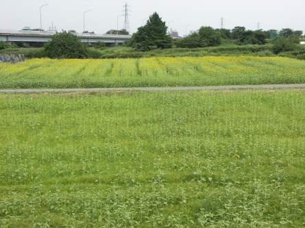 Himawari4