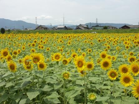 Himawari7