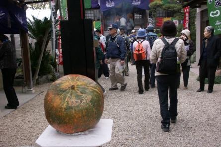 Tamuraji0031