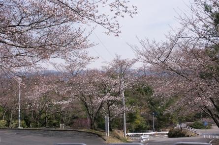 Kuragaike0042