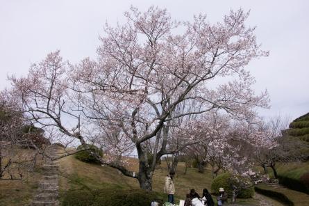 Kuragaike011