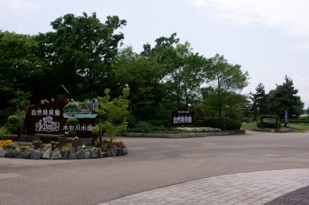 Kawasima003