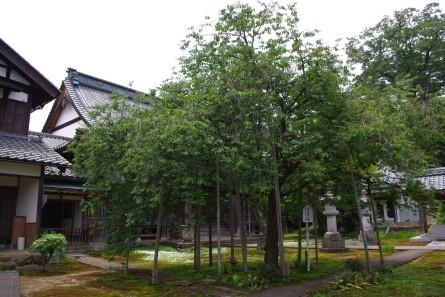 Jyofuku005