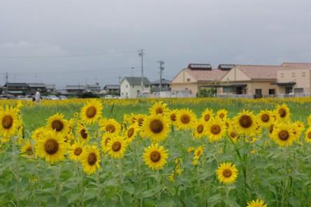 Kamisyuku006