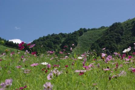 Kosumosu002
