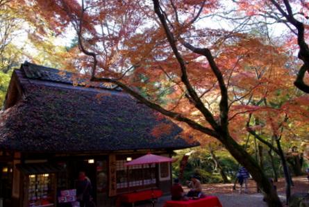 Kasuga011