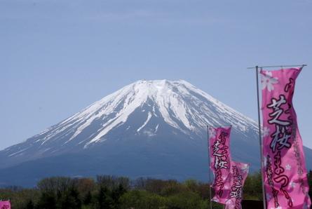 Shibazakura001