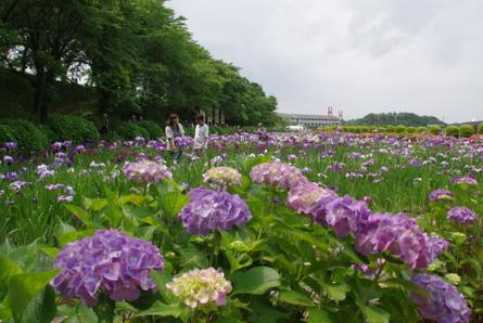 Kitagatako10