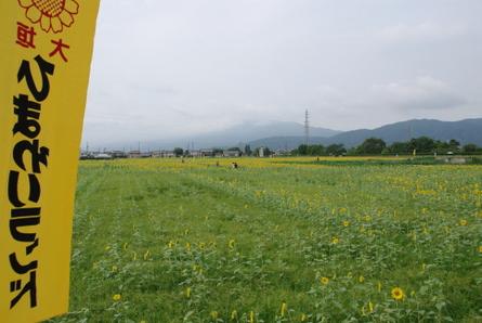 Himawari003