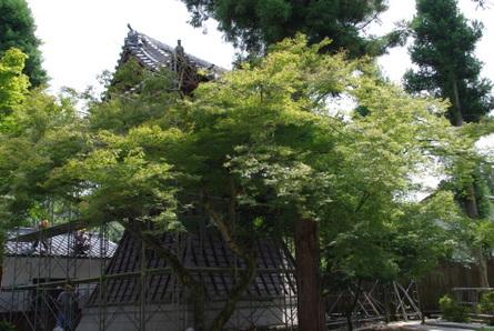 Eihoji03