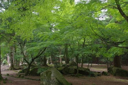Miyajima12
