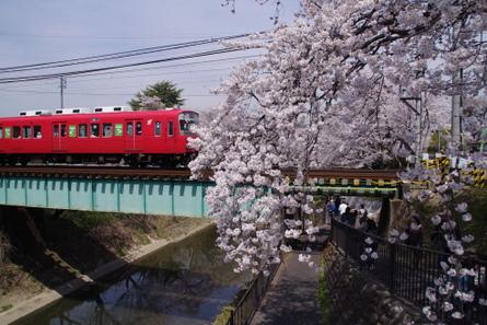 Sakura001
