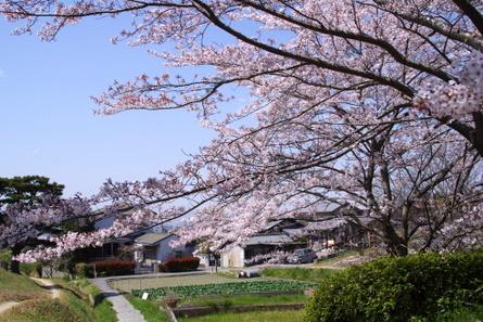 Yamanobe003