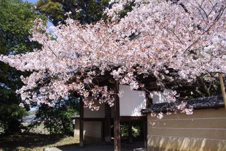 Yamanobe005