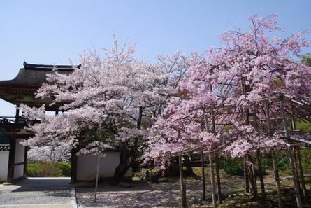 Yamanobe007
