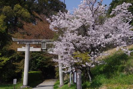 Yamanobe011