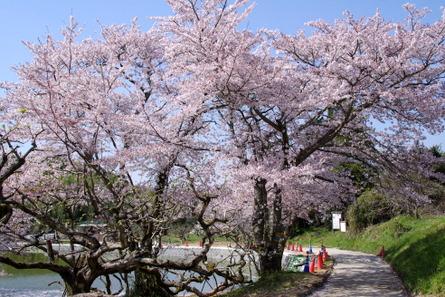 Yamanobe012