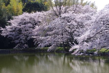 Yamanobe014