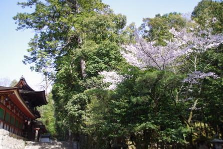 Yamanobe015