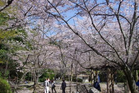 Yamanobe016