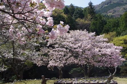 Yokowa12