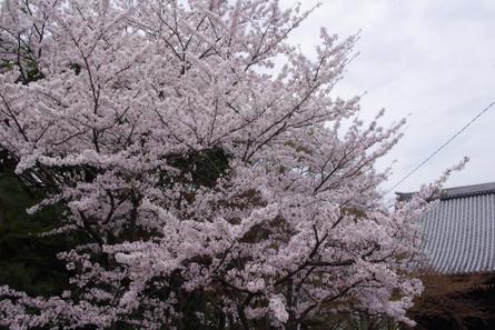 Hikiyama11