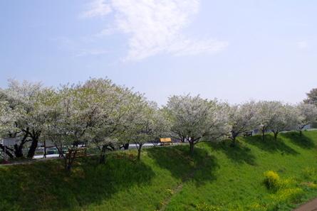Takakuwa01