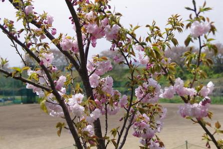 Takakuwa13
