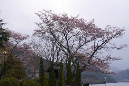 Tsuburoko071